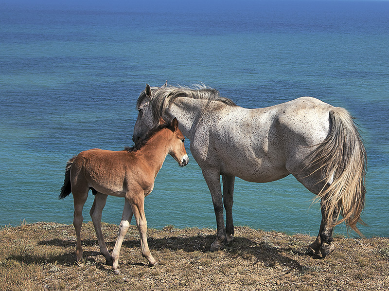 кони-2