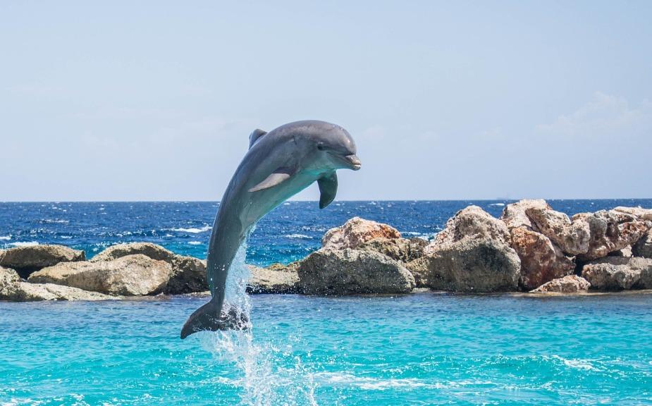 dolphin-906176_1280